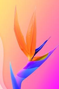 Flowers Of Paradise 4k