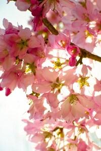 1080x1920 Flowers Sky Nature Light