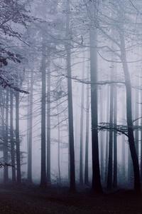 Fog Forest Morning 4k