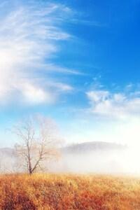 Fog Trees Cloud