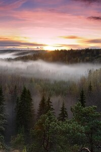 Foggy Sunrise National Park