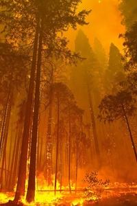 640x1136 Forest Fire 4k