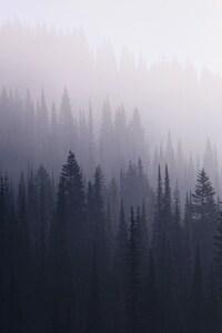 360x640 Forest Mist