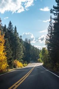 Forest Road Asphalt Landscape 5k