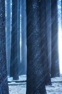 360x640 Forest Sunbeam
