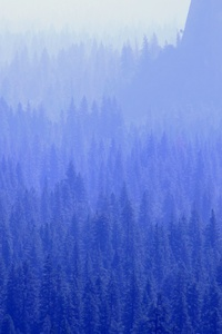 240x320 Forest Trees Blue Tone 5k