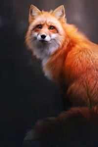 1125x2436 Fox Digital Art 4k