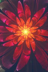 Fractal Flower 4k