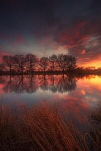 480x854 France Spring Lake Grass