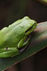 1080x2280 Frog Wild
