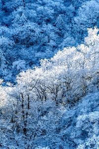 480x800 Frost Snow 5k