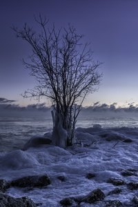 Frozen Winter Snow Landscape