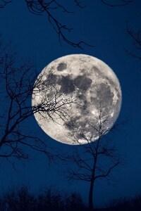 480x854 Full Moon