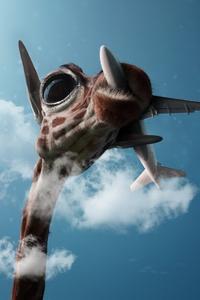 Giraffe Passing Plane