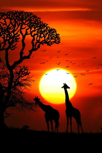 Giraffe Rhino Sunset Red Sky Tree Forest Nature 4k