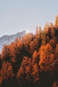 1080x2280 Golden Trees 5k