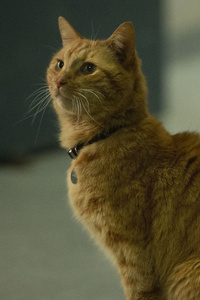 Goose The Cat In Captain Marvel 2019