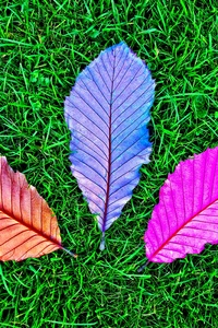 Grass Fallen Colorful Leaves 5k