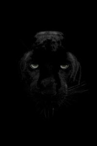 1080x2280 Green Eyes Black Panther