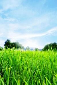 Green Horizon HD