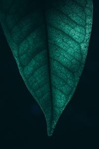 Green Leaf Macro 4k