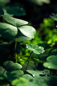 Green Leaf Macro Nature Grass Water Drop