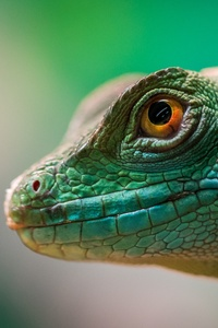 Green Lizard Reptile Macro 4k