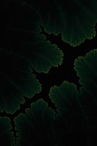640x1136 Green Plants Dark Amoled
