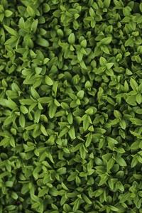 Green Plants Leaves 5k