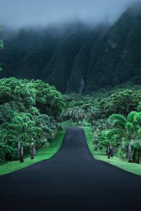 800x1280 Green Road Nature 4k