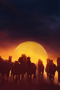 1080x2160 Group Of Horses Running