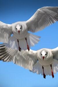 1440x2960 Gulls Seabirds