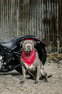 1280x2120 Harley Davidson And Dog