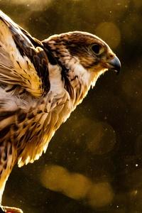 640x1136 Hawk 5k