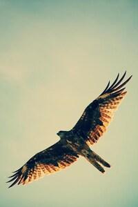720x1280 Hawk