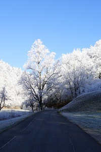 320x568 Hill Frost Road Trees 8k
