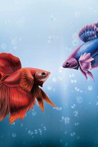 480x800 Him And I Betta Fish