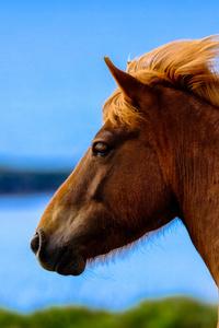 1080x2280 Horse In Depth Of Field 5k