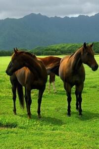 Horse In Open Field