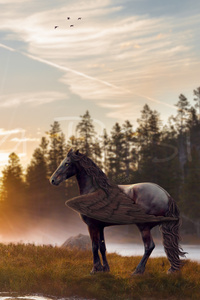 Horse Magical Mysterious 4k