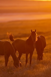 2160x3840 Horse Photography