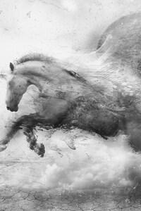 320x568 Horse Ride