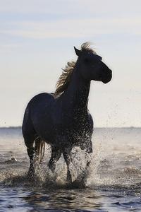 Horse Running On The Beach 4k 5k