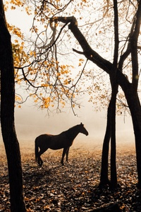 1125x2436 Horse Sunlight Forest Photography 5k