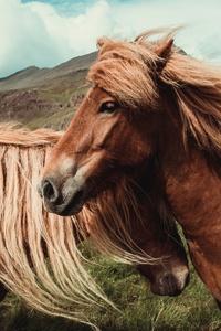 Horses 5k