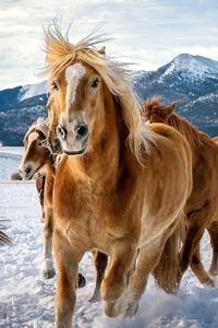 640x960 Horses Snow Running 4k