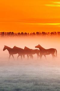 Horses Sunset 4k