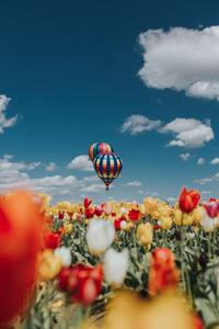 Hot Air Balloons White Red Yellow Tulip Flowers