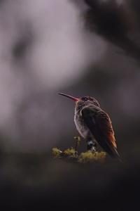 Humming Bird Sitting Down