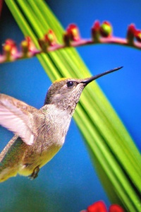 1080x2160 Hummingbird Bird